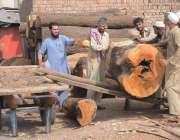 راولپنڈی: ٹمبر مارکیٹ میں مزدور بھاری لکڑی گودام میں منتقل کررہے ہیں۔