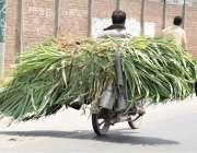 لاہور: ایک شخص موٹر سائیکل پر بھینسوں کے لئے چارہ لیکر جار ہا ہے۔
