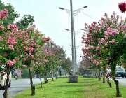 اسلام آباد: وفاقی دارالحکومت میں سڑک کنارے لگے موسمی پھول خوبصورت منظر ..