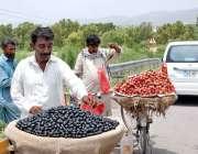 اسلام آباد: محنت کش گاہکوں کو متوجہ کرنے کے لیے جامن سجا رہا ہے۔
