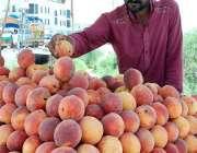 اسلام آباد: ریڑھی بان گاہکوں کو متوجہ کرنے کے لیے آڑو سجا رہا ہے۔