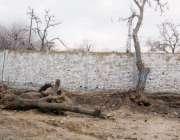 کوئٹہ: وڈن روڈ پر پڑے درخت کسی حادثے کا سبب بن سکتے ہیں۔
