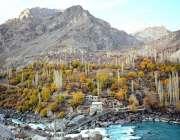 خارمنگ: دریائے سندھ کے کنارے موسم خزاں کے موسم کے آغاز پر درختوں کے ..
