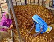 حیدر آباد: مزدور خواتین چیکو چھانٹی کر کے لکڑی کی پیٹیوں میں پیک کر ..