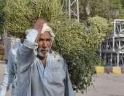 لاہور: ایک شخص اپنے جانوروں کے لیے چارہ لیکر جا رہا ہے۔