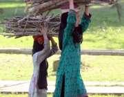 اسلام آباد: دو بچیاں گھر کا چولہا جلانے کے لیے خشک لکڑیاں اٹھائے لیجا ..