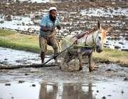 لاڑکانہ: کسان روایتی انداز سے کھیت میں ہل چلانے میں مصروف ہے۔