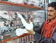 لاڑکانہ: دکاندار نے گاہکوں کو متوجہ کرنے کے لیے کبوتر سجا رکھے ہیں۔