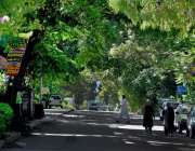 اسلام آباد: وفاقی دارالحکومت میں درختوں سے ڈھکی سڑک خوبصورت منظر پیش ..