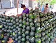 حیدر آباد: دکاندار گاہکوں کو متوجہ کرنے کے لیے تربوز سجا رہاہے۔