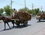 فیصل آباد: مزدور گھوڑا ریڑھی اور گدھا ریڑھی پر لکڑیاں لادھے جا رہے ہیں۔