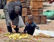 ملتان: خانہ بدوش خاتون اپنے بچے کے ہمراہ کارآمد ٹماٹر چن رہا ہے۔