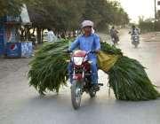 فیصل آباد: کسان موٹر سائیکل پر چارا لادھا جارہاہے۔