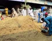 سرگودھا: غلہ منڈی میں مزدور چاول کی فصل سے بیگ بھرنے میں مصروف ہیں۔