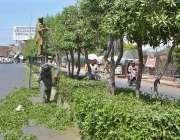 ملتان: پی ایچ اے اہلکار گرین بیلٹ پر لگے پودوں کی اضافی شاخیں تراشنے ..