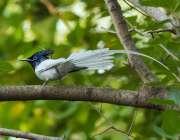 اسلام آباد: وفاقی دارالحکومت میں درخت کی شاخ پر خوبصورت پرندہ بیٹھا ..