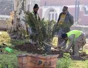 پشاور: پی ڈی اے اہلکار پودے لگانے اور دیکھا بھال کرنے میں مصروف ہیں۔