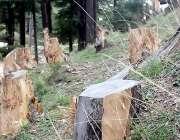 مظفر آباد: محکمہ جنگلات کی نا اہلی کے باعث سیاحتی مقام سیری کوٹ میں ..