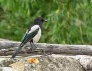گلگت: دریائے انڈس کنارے بیٹھا پرندہ خوبصورت منظر پیش کر رہا ہے۔