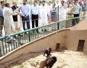 لاہور: صوبائی وزیر جنگلات محمد سبطین خان جلو پارک لاہور کے دورہ کے دوران ..