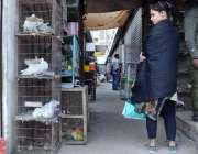 کراچی:  لڑکی پرندوں کی مارکیٹ میں پرندے خریدتے ہوئے
