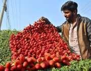 ملتان: ریڑھی بان گاہکوں کو متوجہ کرنے کے لیے اسٹرابری سجا رہا ہے۔