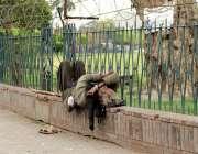 لاہور ریلوے سٹیشن کے سامنے پارک کے باہر ایک نشئی سورہا ہے۔