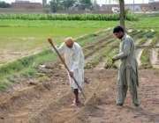فیصل آباد: کسان کھیت کو فصل کاشت کے لیے تیار کر رہے ہیں۔