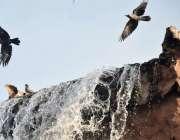 لاہور : جیلانی پارک میں پرندے مصنوعی آبشار سے پانی پینے کے بعد فضاء ..