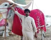 کراچی: سپر ہائی وے پر قائم ایشیا کی سب سے بڑی مویشی منڈی میں ایک بیوپاری ..