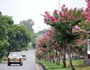 اسلام آباد: وفاقی دارالحکومت میں سڑک کنارے لگے درخت اور پھول خوبصورت ..