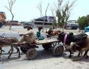 حیدر آباد: عید قربان کے موقع پر بیوپاری گدھا ریڑھی پر سوار مویشی منڈی ..