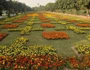 لاہور : جیلانی یارک میں لگے پھول خوبصورت منظر پیش کررہے ہیں۔