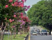 اسلام آباد: سڑک کنارے لگے درخت اور پھول خوبصورت منظر پیش کر رہے ہیں۔