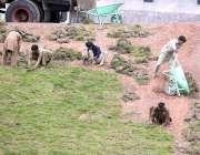 اسلام آباد: محنت کش کھنہ پل کے ہمراہ گھاس لگانے میں مصروف ہیں۔