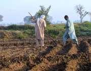 ملتان: کسان کھیت میں روزہ مرہ کام میں مصروف ہیں۔