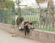 لاہور: ایک بے گھر شخص کھلے آسمان تلے نیند پوری کررہا ہے۔