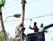 حیدرآباد: ٹنڈی سرک میں کنٹونمنٹ بورڈ والے درخت کی خشک شاخوں کو کاٹنے ..