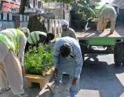 راولپنڈی: پی ایچ اے ملازمین مری روڈ پر پودوں کی کیاریاں سجارہے ہیں ۔
