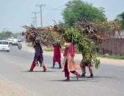 فیصل آباد: خواتین گھر کا چولہا جلانے کے لیے خشک لکڑیاں جمع کیے جا رہی ..