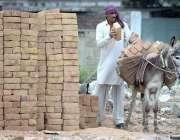 راولپنڈی: مزدور تعمیراتی کام کے لیے گدھے پر اینٹیں لوڈ کررہاہے۔