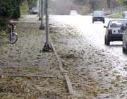 اسلام آباد: وفاقی دارالحکومت میں بارش کے باعث گرے سڑک پر درختوں کے پتے ..