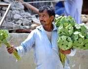 لاڑکانہ: محنت کش پھیری لگا کر موسمی پھل (ڈوڈی) فروخت کررہا ہے۔