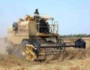 فیصل آباد: جدید مشینری کے ذریعے گندم کی کٹائی جاری ہے۔
