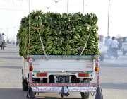 کراچی: کیلے باغ سے کراچی شہر میں فرو خت کے لیے آ رہے ہیں۔
