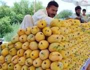 اسلام آباد: ریڑھی بان گاہکوں کو متوجہ کرنے کے لیے آم سجا رہاہے۔