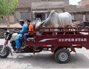 حیدر آباد: شہری چنگچی موٹر سائیکل پر قربانی کے لیے گائے لیجا رہا ہے۔
