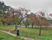 اسلام آباد: شہر میں موسم خزاں کے موسم کے موقع پر درختوں کے پتوں کے رنگ ..
