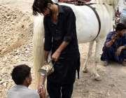 فیصل آباد: محنت کش گھوڑے کی لوہے کی کھریاں بنانے میں مصروف ہے۔