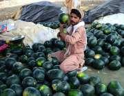 حیدر آباد: دکاندار گاہکوں کو متوجہ کرنے کے لیے تربوز سجا رہا ہے۔